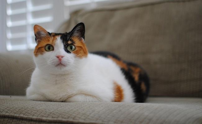 disney-calico-cat-names