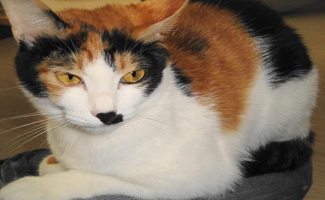 halloween-calico-cat-names