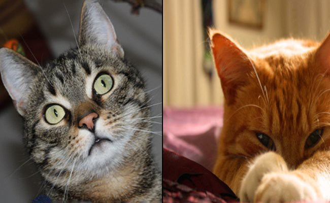 popular-cats-diagnosed-with-feline-down-syndrome
