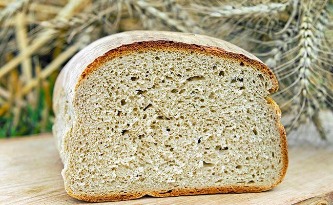 can-dogs-eat-wheat-bread