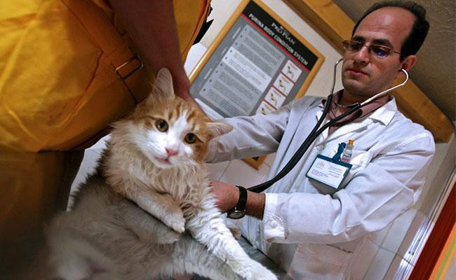 how-is-fiv-medically-treated