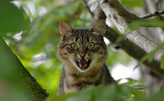 aggression-cat-behavior-problems