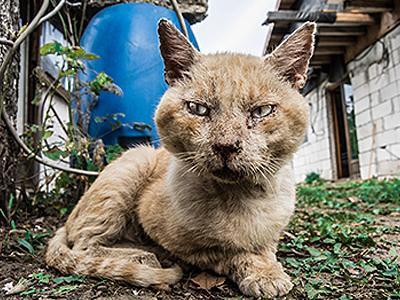 cancer-in-cat