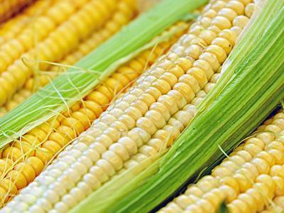 cats-eat-corn