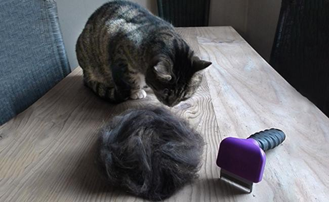 how-to-restrain-a-cat-for-grooming - Cat Grooming