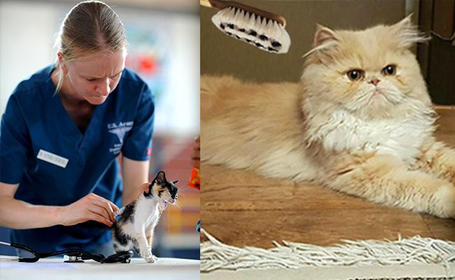 best-cat-shedding-solutions - Cat Shedding