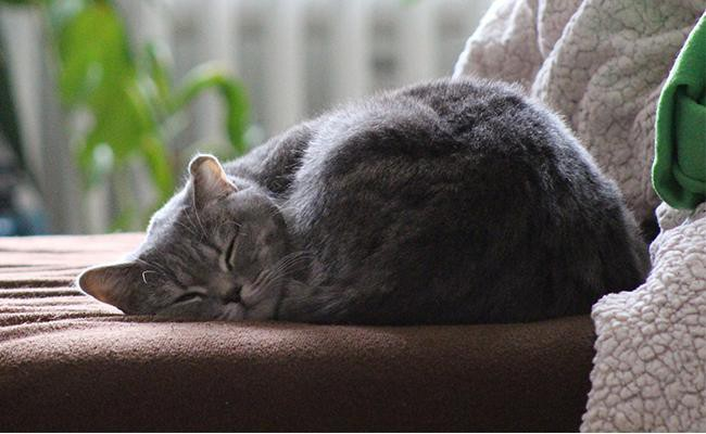 ball-curler Cat Sleeping Positions