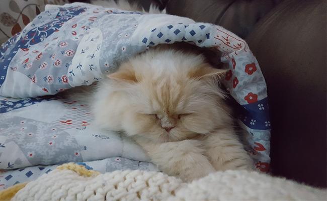 the-face-plaffer Cat Sleeping Positions