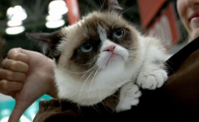 grumpy-cat-celebrity-cats