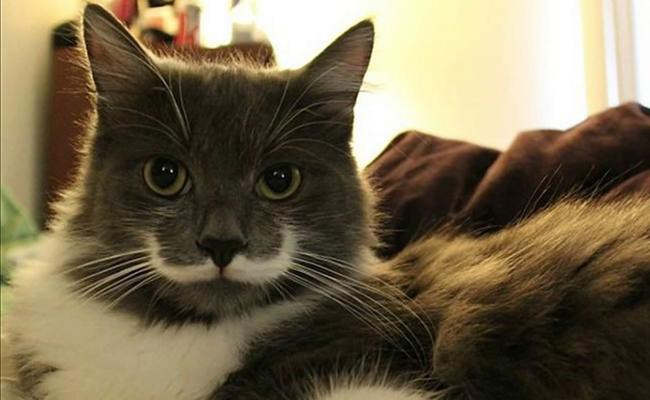 hamilton-the-hipster-cat-celebrity-cats