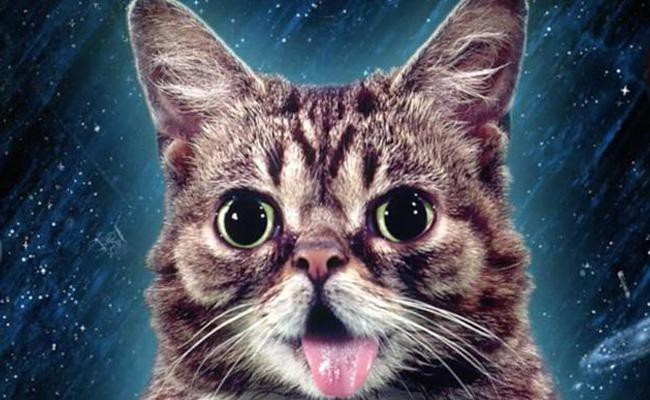 lil-bub-celebrity-cats