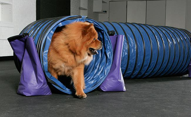 chow-chow-dog-training