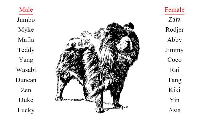 chow-chow-names