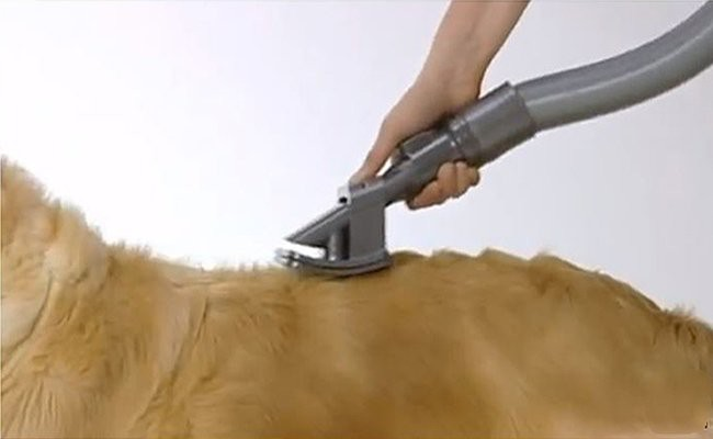 apply-the-dyson-grooming-tool -  Clean Your Dog