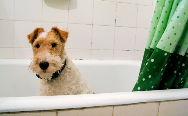 clean-your-dog-to-maintain-the-hygiene-of-your-dog
