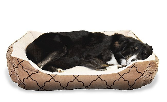 wash-the-bed-of-your-dog-to-eliminate-allergic-substances