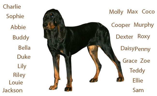 names-of-american-coonhound-dogs