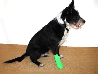 when-your-pet-suffers-from-walking-issues