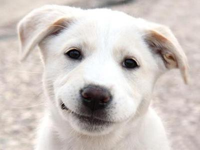the-dog-smile