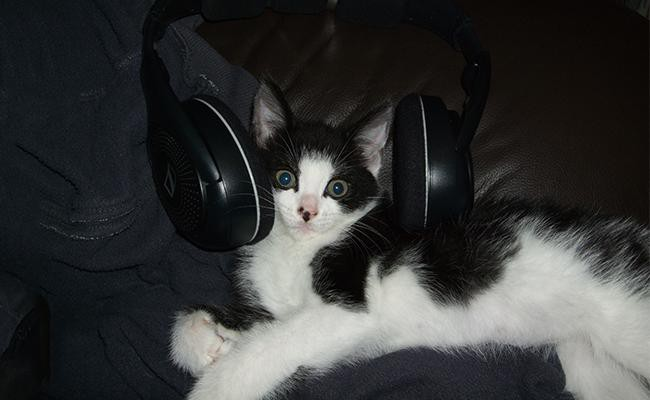 cat-and-music