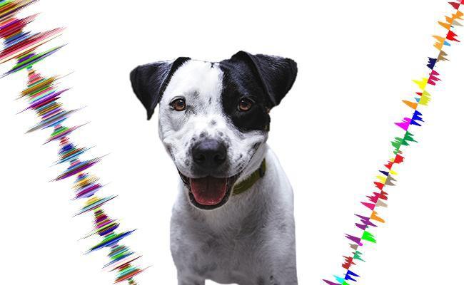 do-dogs-like-slow-rhythm