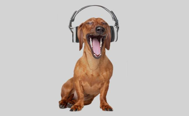 music-calms-the-stressed-pooch