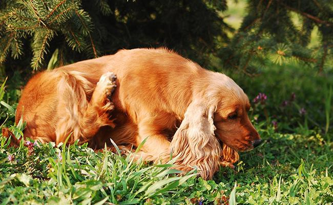 how-can-find-allergies-dog-allergies
