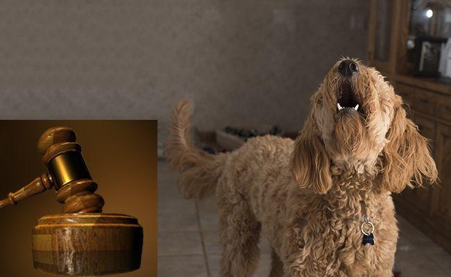 dog-barking-nuisance-law