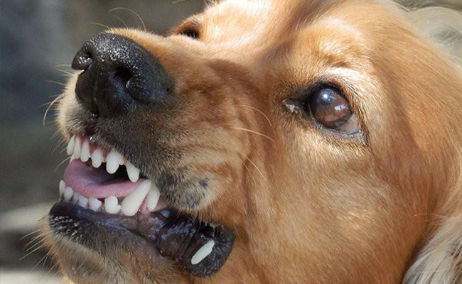 rabies-dog-bite