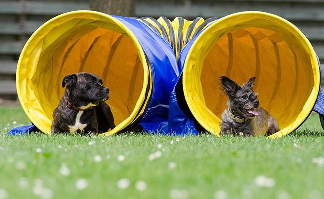 dog-exercise-programs
