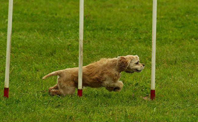 effective-dog-exercises