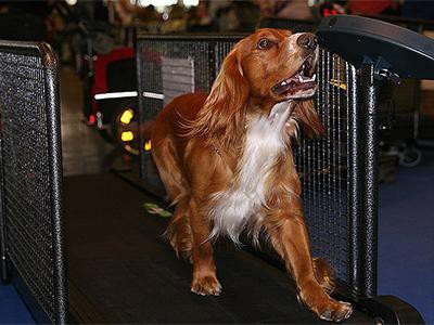 treadmills-for-dogs