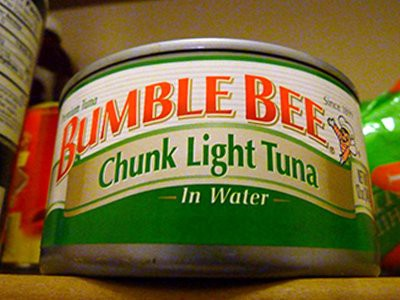 dogs-eat-canned-tuna