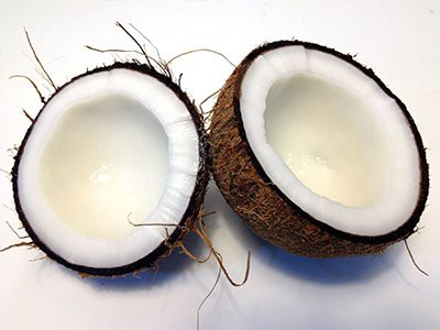 dogs-eat-coconut