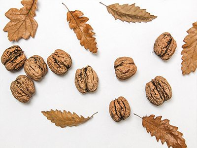 dogs-eat-walnuts