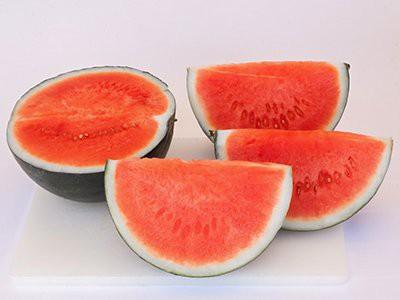 dogs-eat-watermelon