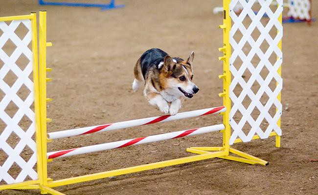 make-your-own-agility-course-dog-games