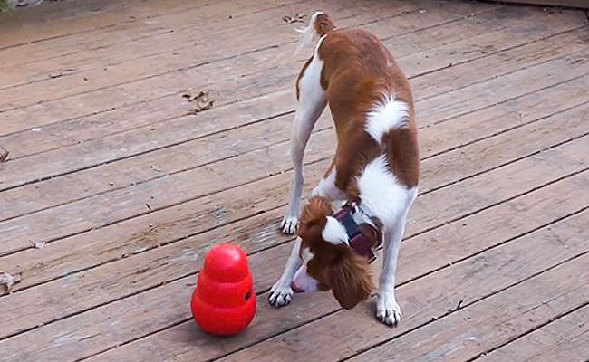 treat-dispensers-and-frozen-kong-recipes-dog-games