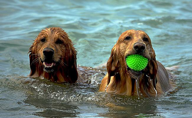 water-games-splash-fun-and-sun-dog-games