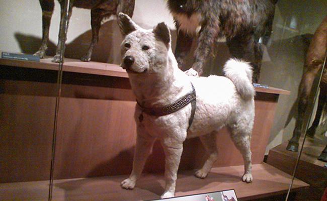 hachiko-dog-heroes