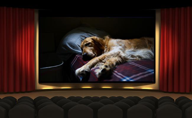 check-your-reaction-to-movies-in-which-a-dog-dies