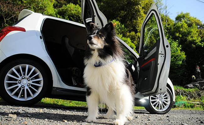 dog-safety-how-to-safely-get-in-and-around-cars
