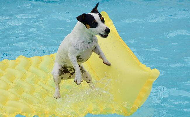 swimming-pool-safety-for-your-dog