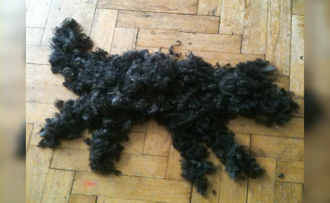how-does-nutrition-impacts-dog-shedding