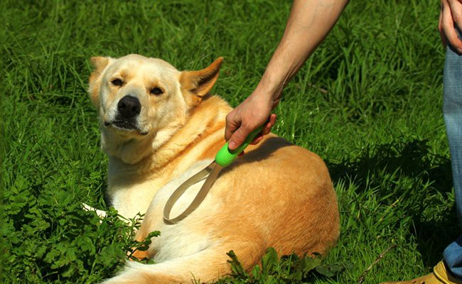 tips-to-choose-the-right-brush-for-grooming-your-dog