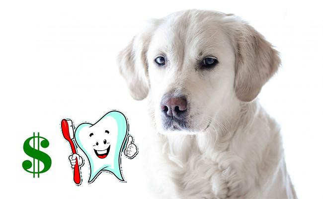cost-of-dog-teeth-cleaning