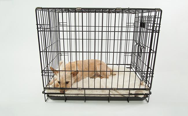 dog-crate Dog Training Equipment