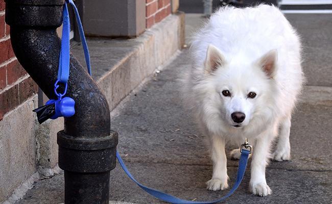 dog-leash Dog Training Equipment