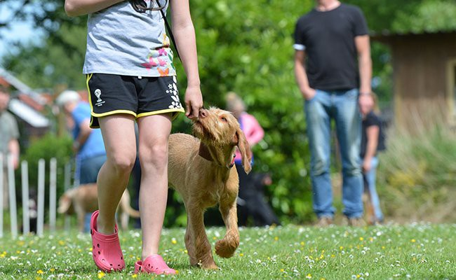most-well-known-mistakes-to-avoid-during-training-dog-training