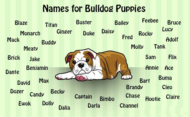 names-for-your-bulldog-puppies